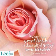 Afrikaans, Van, Rose, Pink, Vans, Roses, Afrikaans Language, Pink Roses