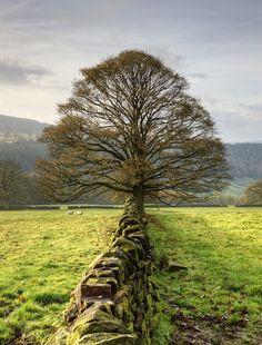 wanderthewood:  Peak District, England byl4ts