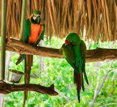 Resultado de imagen de Aluxes Ecoparque