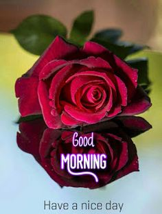 Beautiful good morning images with flowers Good Morning Love Text, Good Morning Couple, Good Morning Sunday Images, Good Morning Beautiful Images, Happy Morning, Good Morning Picture, Good Morning Messages, Morning Pictures, Morning Quotes