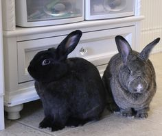 The Raspberry Rabbits: Pets on Quilts Blog Hop