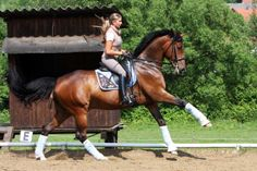"""""""Flying Changes"""" from Kottas on Dressage"""
