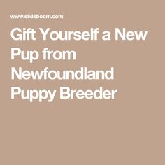 Gift Yourself a New Pup from Newfoundland Puppy Breeder