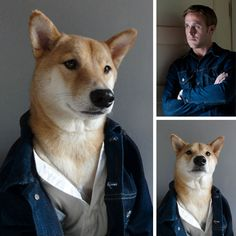 Bodhi the shiba inu stealing Ryan Gosling's look in Drive. Check out http://mensweardog.tumblr.com/
