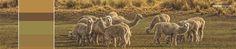 Michell Calendar- Andean Heritage Colour Inspiration - March 2016 #alpaca #alpacayarns #finestperuvianalpaca