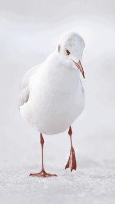 Seagul Close-up