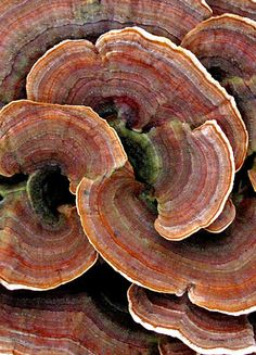 Pattern, texture - fungus