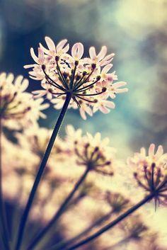 #Blumen #flowers #fleur #Blumenwiese #Sonnenstrahlen #Sonnenschein