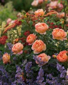 My Favorite Plant Combinations 76