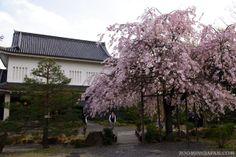 Japanese castles I've visited: #86 Shoryuji Castle in Kyoto.