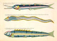Histórias Naturais: 500 Anos de Ciência Ilustrações raras | Colheitas do cérebro
