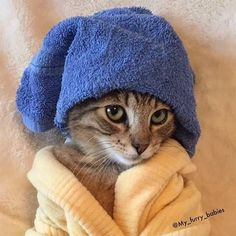// cats pets cute Source by Pets_life_animals_love videos wallpaper cat cat memes cat videos cat memes cat quotes cats cats pictures cats videos Cute Cats And Kittens, I Love Cats, Baby Cats, Cool Cats, Kittens Cutest, Cute Baby Animals, Cute Funny Animals, Funny Cats, Wild Animals