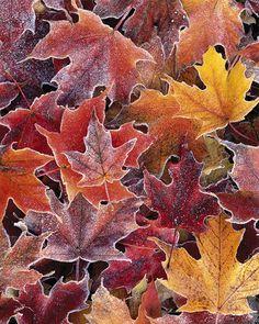 Autumn Frost by John Gavrilis