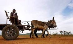 Photo: Three children ride in a donkey cart near Borakalalo village in South… Side Saddle, Donkeys, Three Kids, Dressage, Beautiful Horses, Landscape Photos, African Art, Fun Activities, Equestrian
