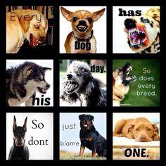 Dogs=love