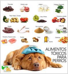alimentos tóxicos para perros Alimento Perros ab77c49da01