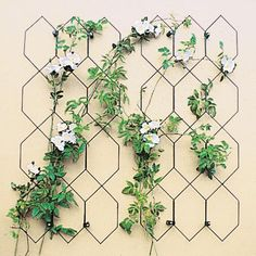 Lattice Trellis Matt Black