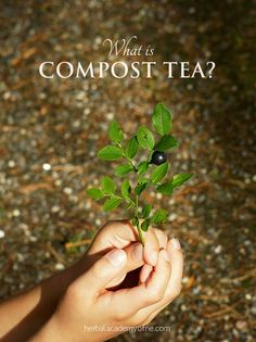 Ever done compost tea before? Here's why you should do it...