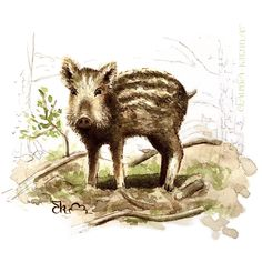 Watercolor Illustration. Wild Boar, Flora And Fauna, Watercolor Illustration, Digital Art, Animals, Animales, Animaux, Animal, Animais