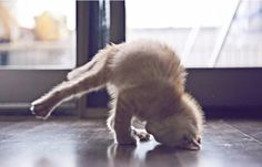 The Yoga Cat OooooommmmMMMMMM