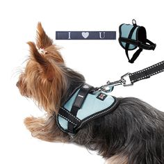 Wholesale Dolomy Reflective Seat Belt Slogan Dog Chest Back Traction Rope Dog Chain PET Strap Chest Strap from Our website with high quality and fast shipping worldwide. Cat Leash, Cat Harness, Rope Leash, Cat Dog, Dog Safety, Explosions, Large Dog Breeds, Pet Carriers, Service Dogs