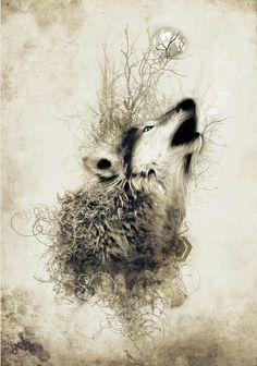 Loup, dessin