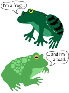 FAQs: difference between frogs and toads