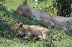 African Safari... MUST!!!