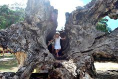Walking inside a hollow tree trunk, Brazil