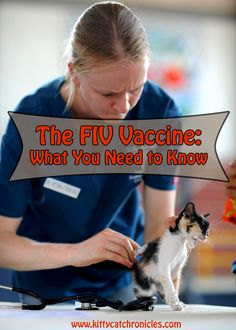 The FIV Vaccine: Wha
