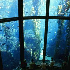 Monterey Bay Aquarium. Monterey CA