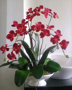 Flores d'k - Plantas/Flores Permanentes Orchid Flower Arrangements, Orchid Centerpieces, Orchid Plants, Beautiful Flower Arrangements, Unusual Flowers, Types Of Flowers, Red Flowers, Beautiful Flowers, Red Orchids