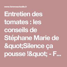"""Entretien des tomates : les conseils de Stéphane Marie de """"Silence ça pousse !"""" - Femme Actuelle"""