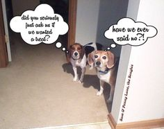 Beagle logic
