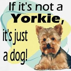 If it's not a Yorkie, it's just a dog.