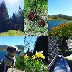 Super vue sur le lac #capture#mountain#montagne#forest#foret#campagne#randonnee#hiking#instafresh#instasport#walking#instawalk#training#running#landscape#nofilter#nature#park#parc#parcnational#cevennes#france#treeking#desintox#corner#instamagic#freedom#thebeautifulplaces#lake by itsmemeline