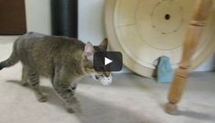 This Cat Has Learned to Hunt for His Dinner
