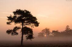 Mistige zonsopkomst in De Peel vanmorgen (America 14-03-2014). Gerton Peters (fotograaf) Mooie Luchten