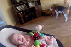 This Dog Apologising To A Baby For Stealing Her Toy Is The Sweetest Thing That Ever Happened