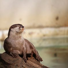 Otter basks in the moment - January 4, 2017