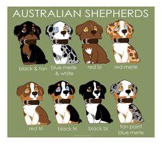 Australian Shepherd Breed colors | Australian Shepherd Color Patterns by briteddy on deviantART