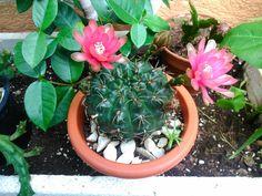 Imágenes de plantas bonitas