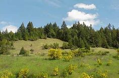 Hills around Garberville. I grew up running these hills as a child.
