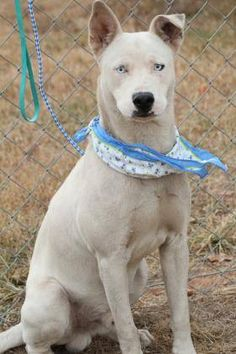 ADOPTED>NAME: Rabbit  ANIMAL ID: 33961812  BREED: Husky mix  SEX: male(altered)  EST. AGE: 2 yr  Est Weight: 45 lbs  Health: Heartworm neg  Temperament: dog friendly, people friendly  ADDITIONAL INFO: RESCUE PULL FEE: $35  Intake date: 11/29  Available: Now