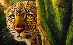 Leopard, by Christiane Vleugels.