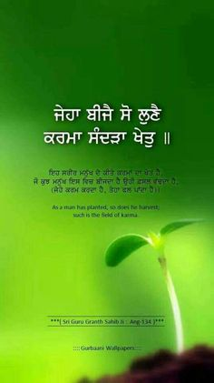 As you sow, so shall you reap Sikh Quotes, Gurbani Quotes, Indian Quotes, Truth Quotes, Qoutes, Guru Granth Sahib Quotes, Sri Guru Granth Sahib, Guru Nanak Jayanti, Guru Gobind Singh