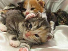Klein, bunt und hübsch: Dreifarbige Katzenbabys - Seite 1