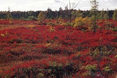 The Kouchibouguac National Park is one of two Canadian National Parks in New Brunswick, Canada and was established in 1969. Featuring a collection of tidal rivers, freshwater systems, lagoons, salt marshes, and bogs, as well as the second largest term colonies of North America.