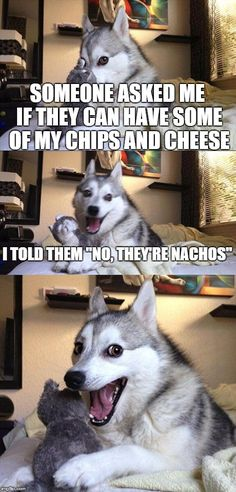 Bad Pun Dog | SOMEONE ASKED ME IF THEY CAN HAVE SOME OF MY CHIPS AND CHEESE I TOLD THEM