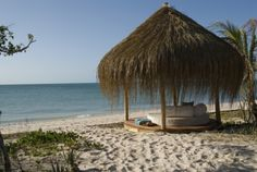 Botswana Safari & Mozambique Tropical Island Honeymoon   http://www.africanwelcome.com/south-africa-honeymoon-safari-south-africa/honeymoon-packages/botswana-safari-mozambique-island-honeymoon
